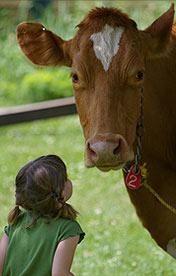http://www.nhkidventures.com/wp-content/uploads/2014/03/cow.jpg
