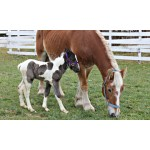 http://www.nhkidventures.com/wp-content/uploads/2014/03/horse_grazing-wpcf_150x150-pad-transparent.jpg