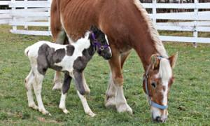 http://www.nhkidventures.com/wp-content/uploads/2014/03/horse_grazing-wpcf_300x180.jpg