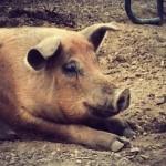 Backwoods Farms- Rumney NH